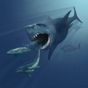 An artist's impression of a megalodon chasing whales.