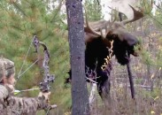 Réal Langlois bagged this record Yukon moose from just a few feet away.