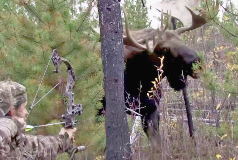 Video 6 Close Range Hunting Encounters That Will Make