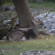 """Michigan hunters will know where this buck is, or a bigger one. It's in the swamp, on the ridge, or down by """"Bob's Blind."""""""