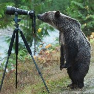 bear photographer