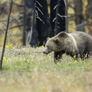Ever wonder whether a bear was following your trail? It may not just be paranoia after all.