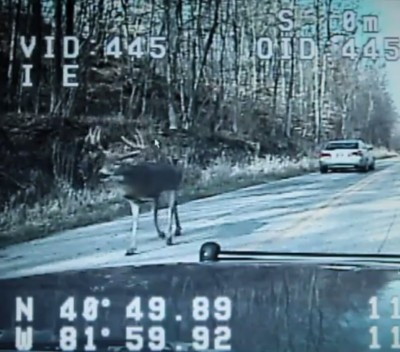 Video Police Dash Cam Shows Buck Wandering Down Ohio Road
