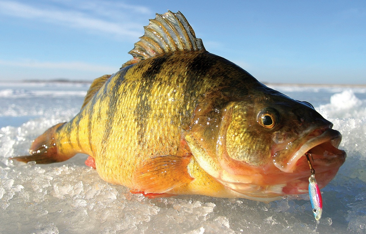 Go small or go home 10 great small lakes for ice fishing for South dakota ice fishing