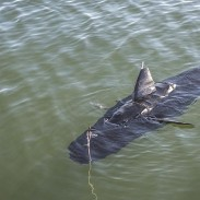 The GhostSwimmer drone during testing at Fort Story, Virginia.