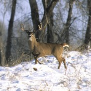The time to prepare your hunting property for next season's success is in the winter. Here are six simple land improvements steps that will increase your odds of success in the seasons to come.