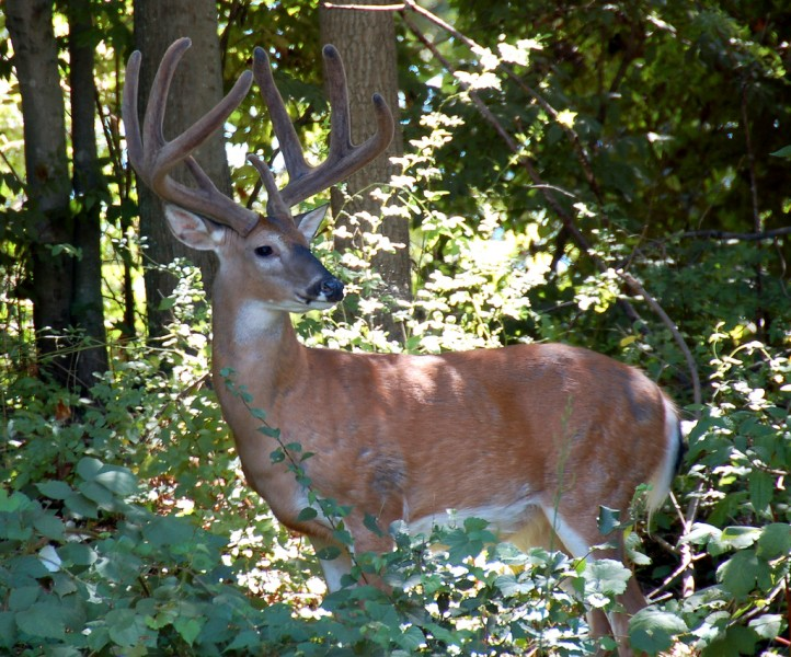 Deer, whitetail or otherwise, are among the most iconic game animals in the world. Nowhere is that more true than in North America, where deer hunting is both a tradition and a lifestyle.