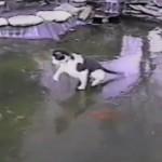 cat ice fish