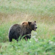 A family of hikers learns the hard way that not all bears respond to warning shots.
