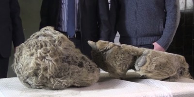 Russian Hunters Discover 10000-year-old Frozen Woolly Rhino in River