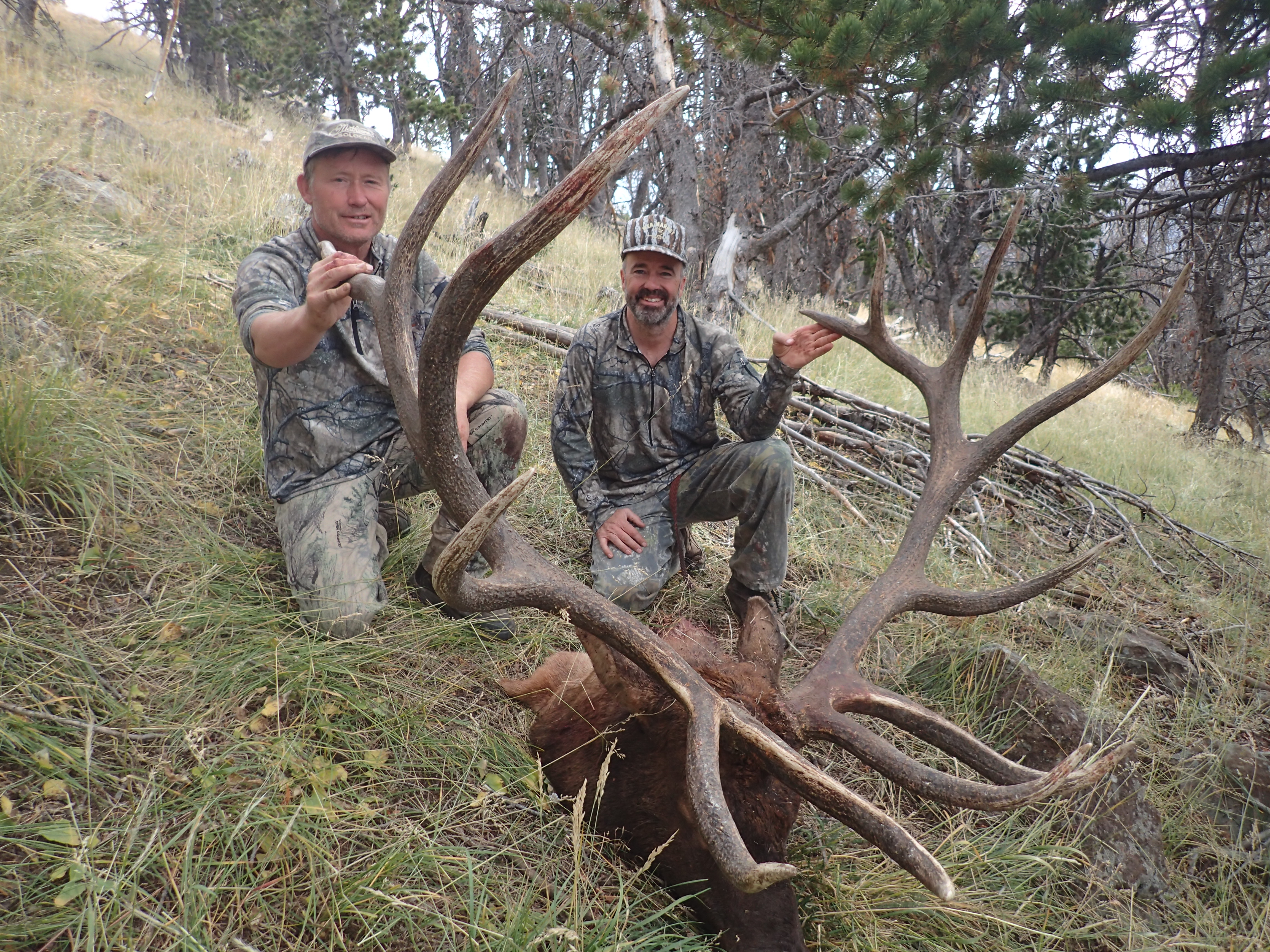 New World Record For Crossbow Elk Confirmed By Sci