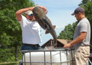 Big catfish draw attention from enthusiasts of every stripe.