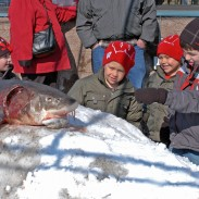 Boys crowd closely around a lake sturgeon after it was registered during a recent spearing season on Wisconsin's Lake Winnebago.