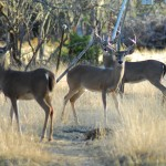 Indiana's captive deer debate continues as a controversial case is appealed to the state Supreme Court.