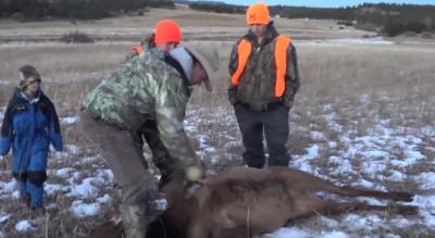 Eichler Elk 2