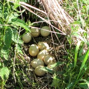 Going on an egg hunt this Easter? Residents of South Hill, Washington will be.