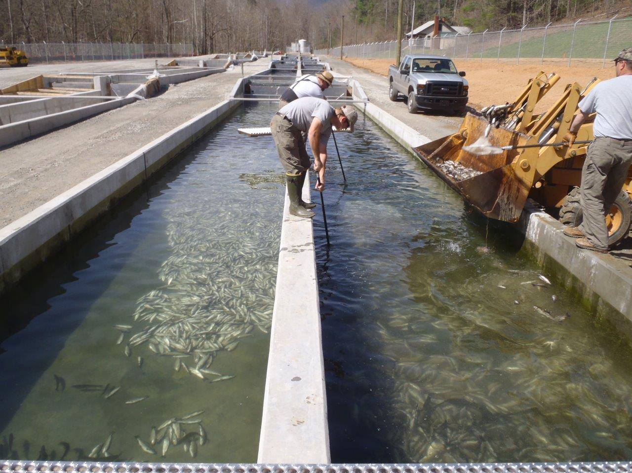 north carolina hatchery maliciously sabotaged 150 000