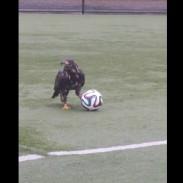 eagleball
