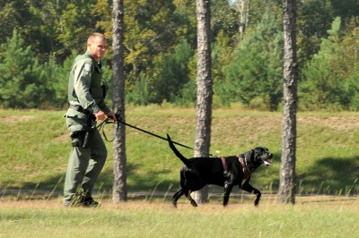Wildlife Officials Train Fish-sniffing Dogs to Use as Secret Weapon Against Poachers