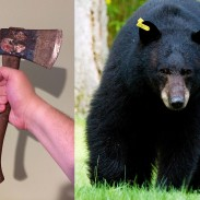 North Adams police made an announcement they never thought they'd have to make when they reminded residents not to chase bears with dull hatchets.