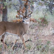 Indiana officials turned down a plan to allow state hunters to use new, larger rifle calibers to hunt deer.