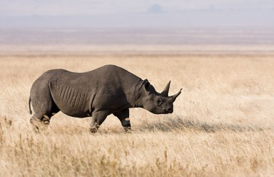 A hunter from Texas finally harvested his black rhino about 18 months after he first won the auction for the permit.