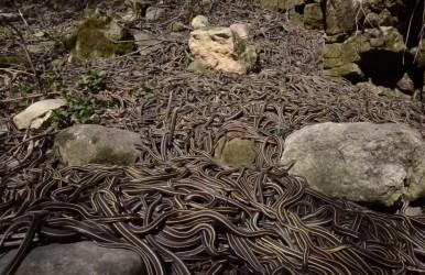 snake dens