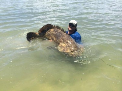 Whopping 550-pound Grouper Breaks Kayak Anglers Rod