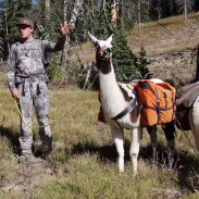 Two hunters on an elk hunt with llamas.