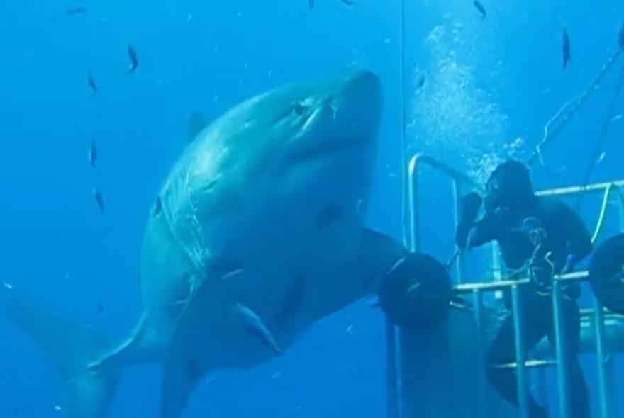Shark  Shows  BBC Earth  BBC Earth