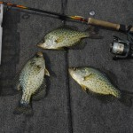 The key to summer crappie is counting the jig down to to the depth the fish are holding.