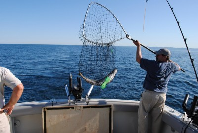 An angler nets a Lake Michigan salmon in summer.