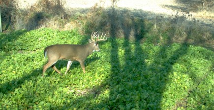 Great food plots can not only keep deer on your property, but they can bring the mature bucks out into the open during daylight.