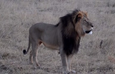 The outrage over Cecil the lion's death continues, and PETA has made a controversial statement.