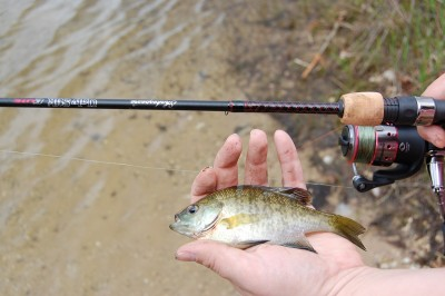 The rod and reel combo impressed us with this little fish in that my wife felt ever little bump of the fish hitting the bait.