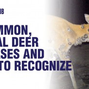 OHUB_5CommonDeerDiseases
