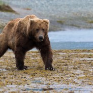 Bears usually want nothing to do with humans, but when they do, the results can be frightening.