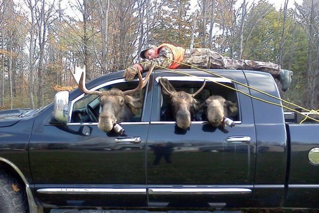 We're pretty sure you can't drink and moose.
