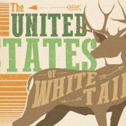 us whitetail featured