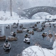 Hunters on November 11, 1940 said they saw more ducks than any other time in their lives. As it turned out, they were fleeing the storm of the decade.