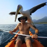 pelican training