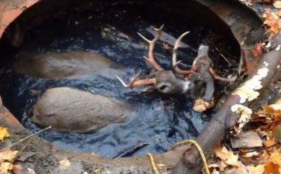 Video Ohio Police Rescue Two Bucks from Cistern