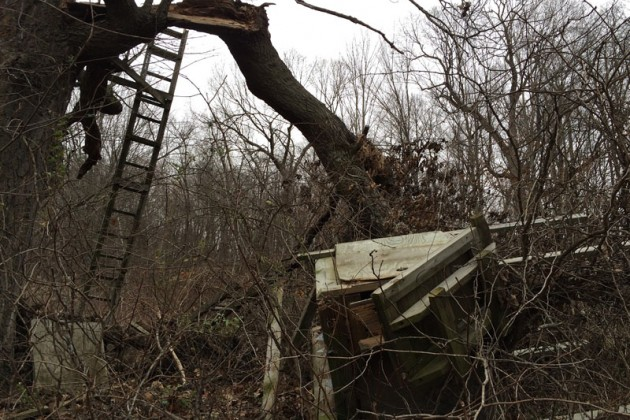 This box stand in Richland County, Wisconsin lasted nearly 26 years in a giant red oak before tumbling in a late summer storm.
