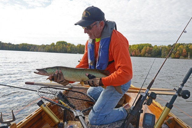 Patrick Durkin prepares to release a sublegal muskie caught Monday in Ashland County. It was the first muskie he's landed while row-trolling.