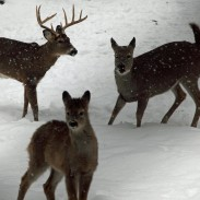 Hunting late-season deer can be challenging, but it also offers many opportunities.