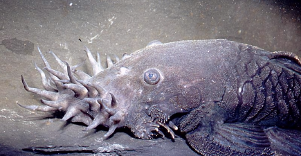 Is this Cthulhu or a catfish? Either way, we're not sure we want to run into it in the dark.