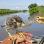 Is that a dinosaur or a small bird? You've probably seen one of these before, just not this close.