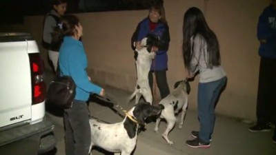 A happy ending for two hunters who never expected to see their dogs again.