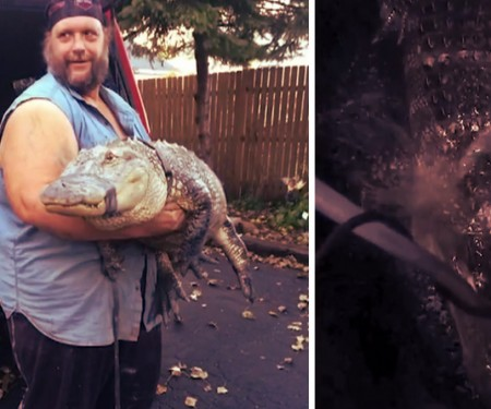 Officials say Charles Price kept this alligator for 26 years without the proper permits.