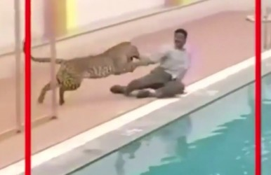 leopardattack